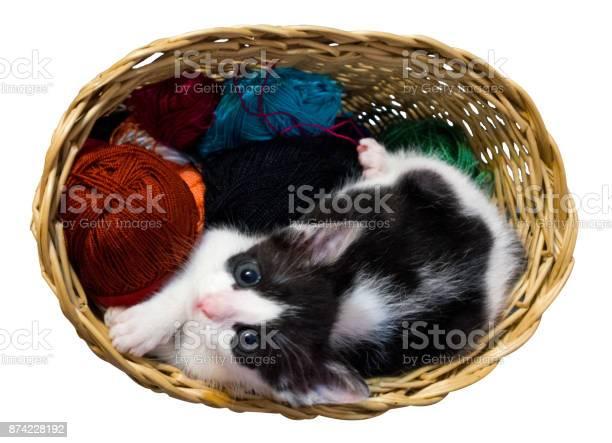 Kitten in wicker basket white background horizontal picture id874228192?b=1&k=6&m=874228192&s=612x612&h=hjl3nity nxppmvr1wsb0ijr9ripmiaicbqn5vr1zi0=