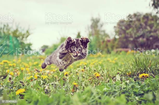 Kitten is jumping picture id512045955?b=1&k=6&m=512045955&s=612x612&h=dk0ijzjo kocqkp5ftojoiotmzvfckd3p5gcpevsdom=