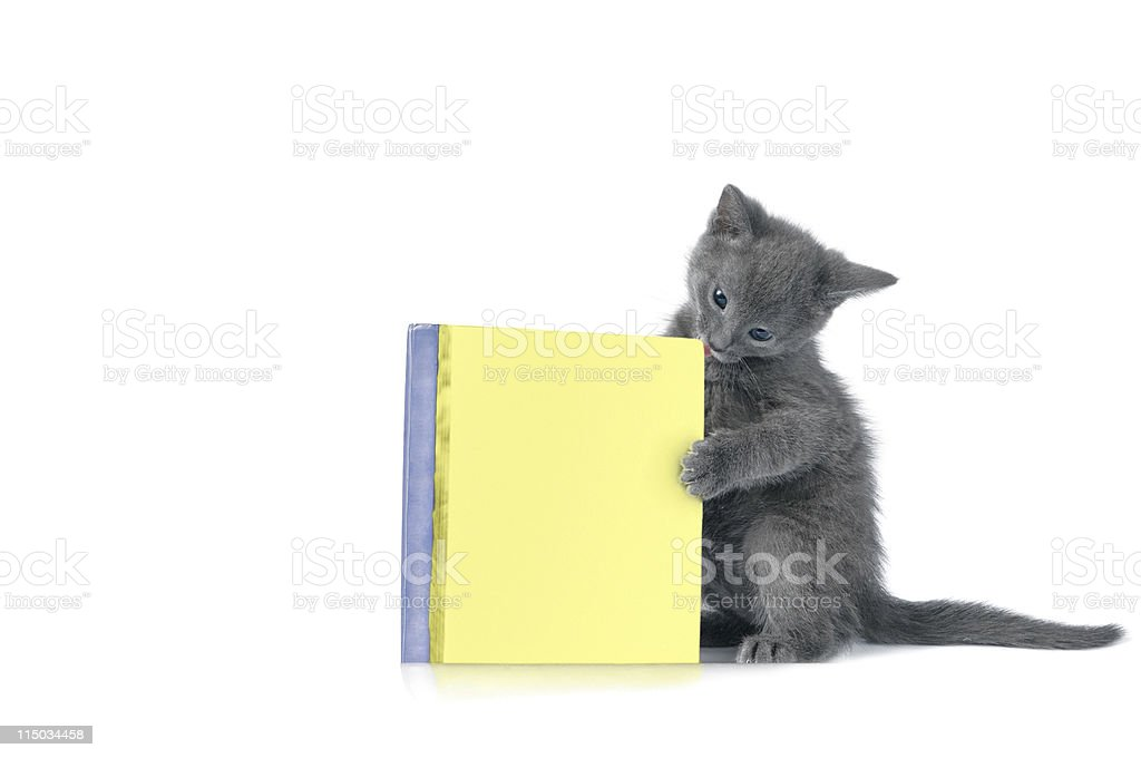 kitten is playing with book royalty-free stock photo