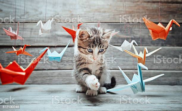 Kitten is playing with paper cranes picture id512130245?b=1&k=6&m=512130245&s=612x612&h=6ebyr7q8atl7slqd6pkavho0brxgcvd1rfa2gjg cpw=