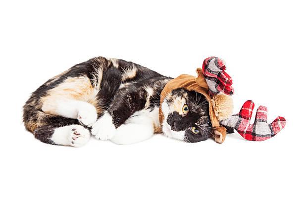 Kitten laying wearing reindeer antlers picture id498551274?b=1&k=6&m=498551274&s=612x612&w=0&h=kjv2a grzw wru0tbwczdx8gvnszagfegrqrzfqsvby=