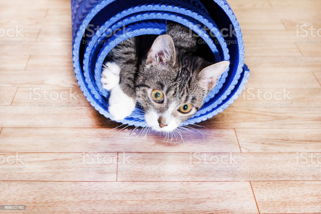 kitten lies in a wrapped blue mat for yoga stock photo