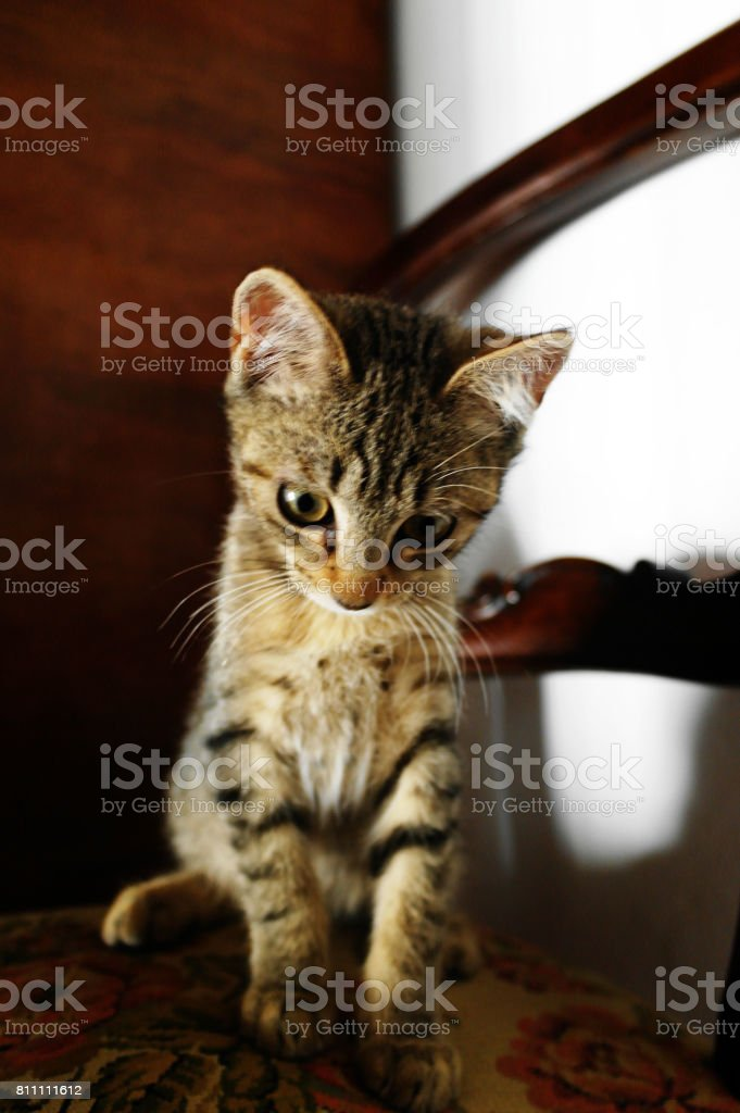 Kitten looking angry staring at the camera stock photo