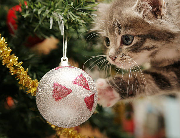 Kitten looking at a christmas tree ornament picture id144805818?b=1&k=6&m=144805818&s=612x612&w=0&h=ih9iux l1yg3cvjqcf18m03epybdnge4twhc 2lvvlo=