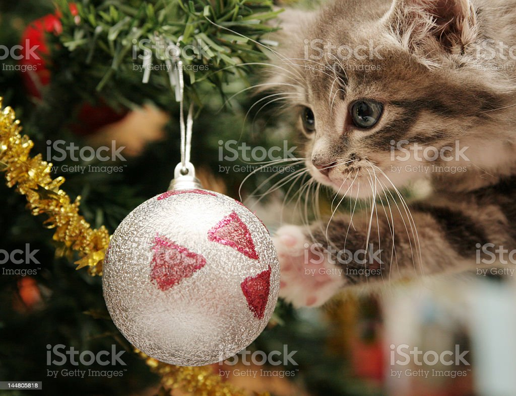 A kitten looking at a Christmas tree ornament  stock photo