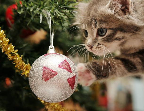 kitten und der christmas tree - katze weihnachten stock-fotos und bilder