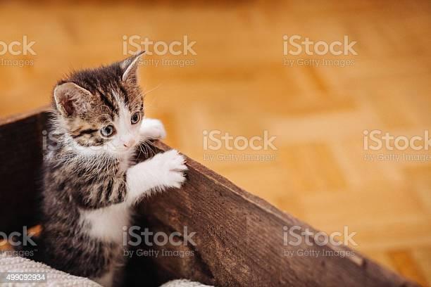 Kitten looking over the side of a wooden box picture id499092934?b=1&k=6&m=499092934&s=612x612&h=lfh0sscj8tykde8em edzrrrvfcyzz1ncmammyaw51w=