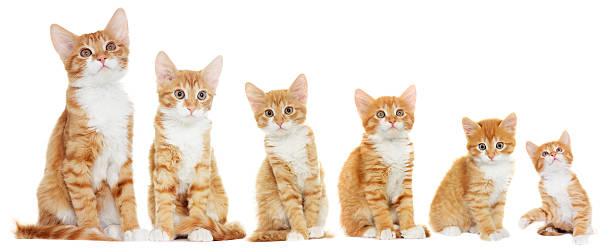 Kitten suchen – Foto
