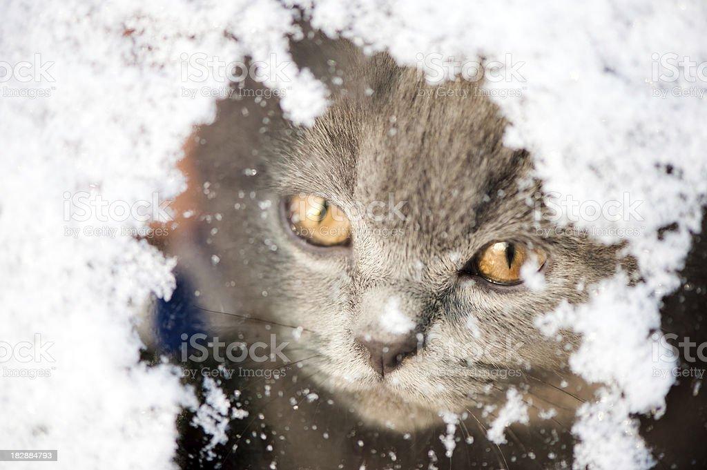 Kitten looking through a snowy window stock photo