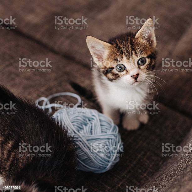Kitten looking up next to ball of yarn on couch picture id498977994?b=1&k=6&m=498977994&s=612x612&h=kfvft7jfyh0a25d3jb5hlyrbfvxooruvlqo3lyeu2bw=
