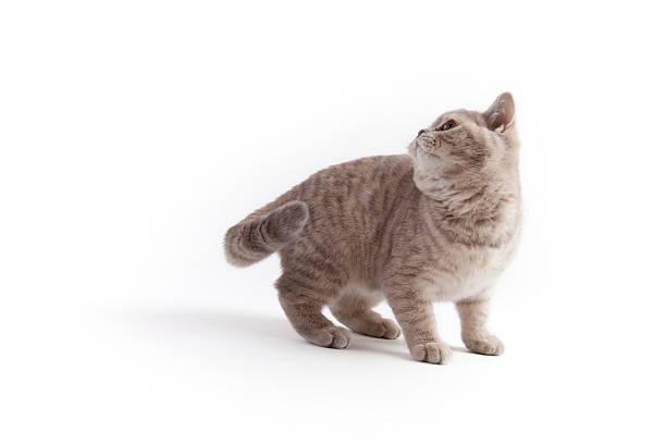 Kitten looking up picture id183380007?b=1&k=6&m=183380007&s=612x612&w=0&h=mwtvihfr60oezweym16i1j7wpxscwdaddkbt2g3r2mu=