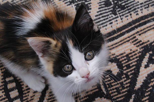 Kitten looking up picture id532180770?b=1&k=6&m=532180770&s=612x612&w=0&h=yg1jnwp1kp85pvzu2ypxzed5z8lf7vcdogqffelixre=