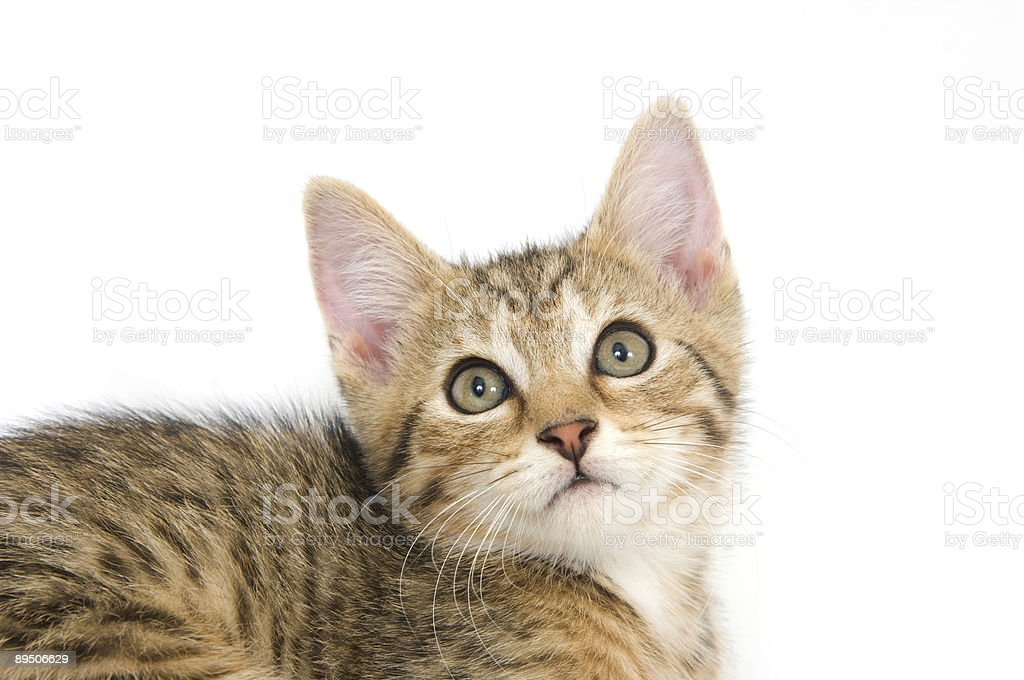 Kitten looking up 免版稅 stock photo