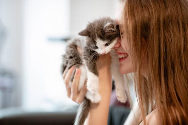 Kitten Love – Foto
