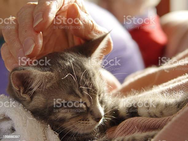 Kitten loving touch picture id139886397?b=1&k=6&m=139886397&s=612x612&h=8uwzrsdkccj4w1gi0bhwxiahqym9uwnlkwrgfynxsjs=