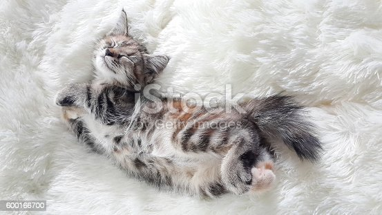 lovely kitten sleeping on a white soft wool, Looked like a stretched.