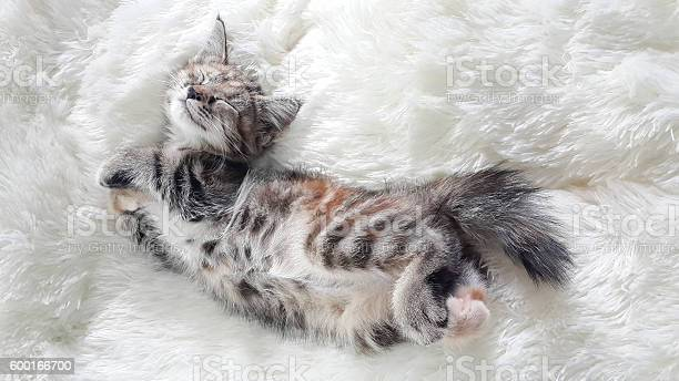 Kitten lying on a soft wool picture id600166700?b=1&k=6&m=600166700&s=612x612&h=bitb9ygizpov20wrgzuw4h9y98wn6zem3zjxkf4v72k=