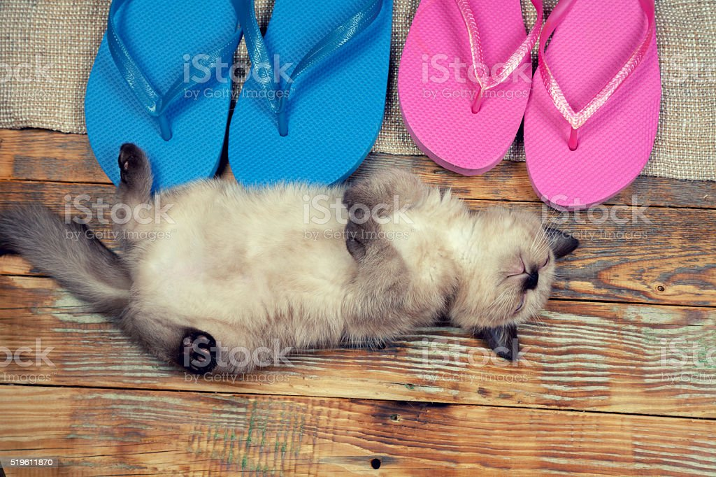 Kitten lying on the back near flip flops sandals stock photo