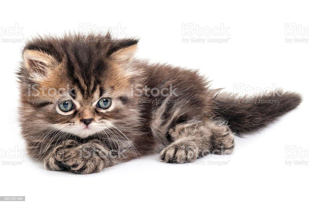 Kitten lying on white background stock photo