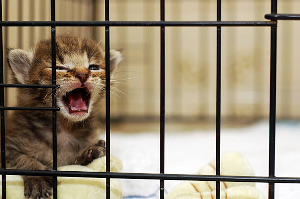 Kitten Meow stock photo