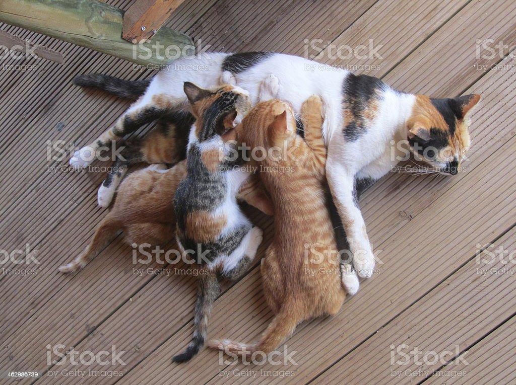 Kitten, Mothers Care