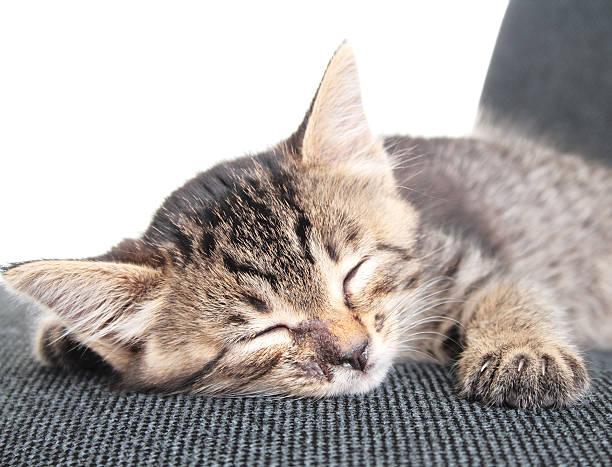 Kitten nap picture id172924865?b=1&k=6&m=172924865&s=612x612&w=0&h=vzga7rxpz4sgcpbriyumukrtk2gnjtinrpswxrh6cs0=