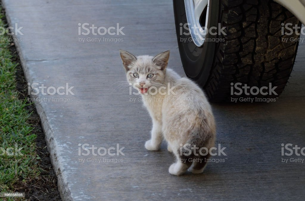 A Kitten Near the Truck stock photo