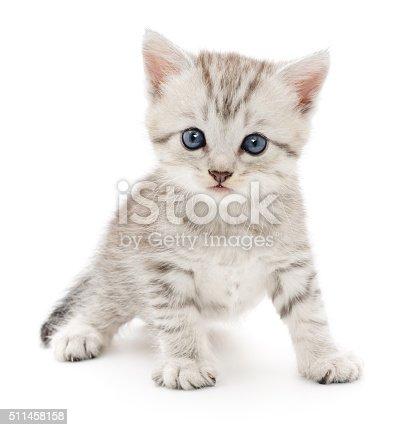 istock Kitten on a white background 511458158