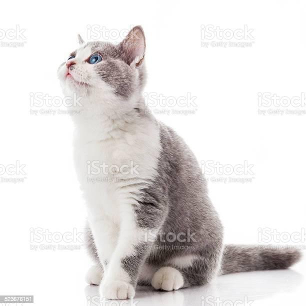 Kitten on a white background picture id523676151?b=1&k=6&m=523676151&s=612x612&h=xwfokv 7ugj0qevylab3mrkl8oypqkpvu2md 779jgy=