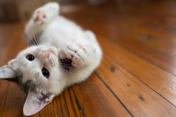 Kätzchen auf dem Boden mit Spielzeug – Foto
