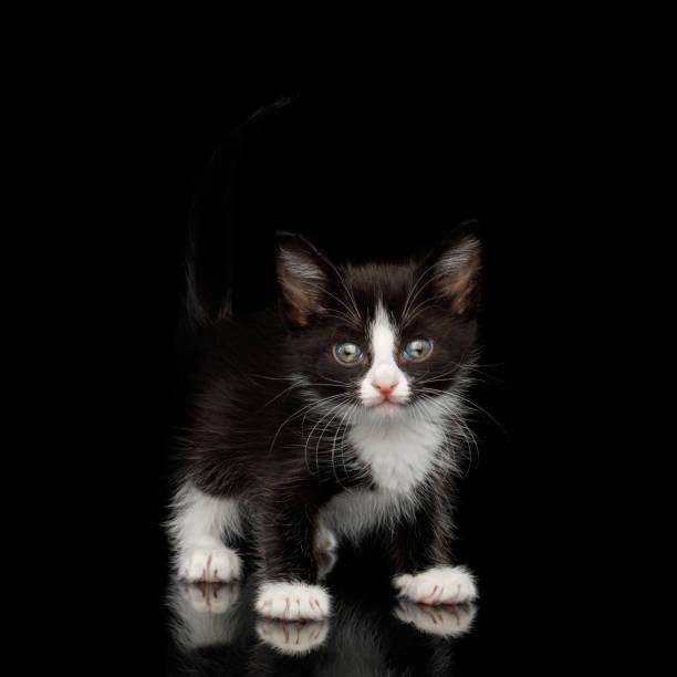 Kitten on isolated black background picture id957164236?b=1&k=6&m=957164236&s=612x612&w=0&h=d2cq7gfvqcxfgoaemlpqusor0rn2jsyyrybjmx8o6am=