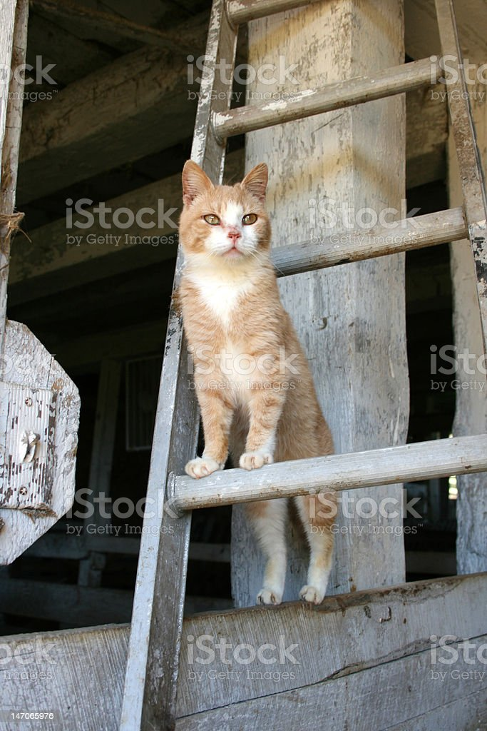 Kitten on ladder stock photo