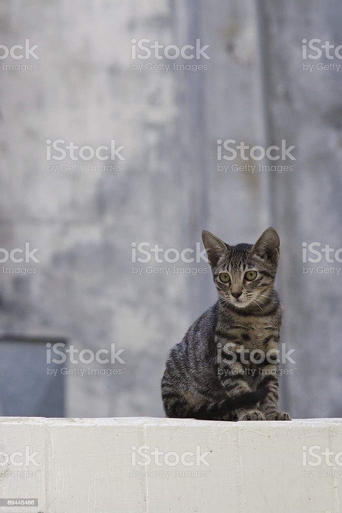 Kitten on roof royalty-free stock photo