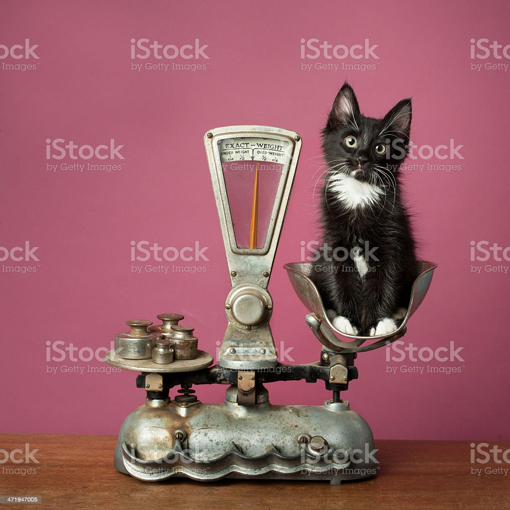 Kitten on Scale stock photo