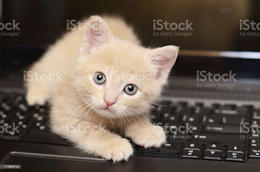 Mascota en el ordenador foto de stock libre de derechos