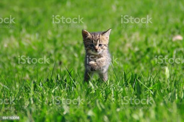Kitten on the grass picture id694163058?b=1&k=6&m=694163058&s=612x612&h=h32vctcqpb8y3v f mwbbzixnsxe84k okwkxirdnvs=
