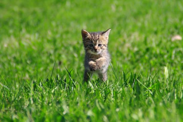 Kitten on the grass picture id694163058?b=1&k=6&m=694163058&s=612x612&w=0&h=zozlhnye9g99nb2wdclyegzzlqwkqecgn 8eslcx7ny=