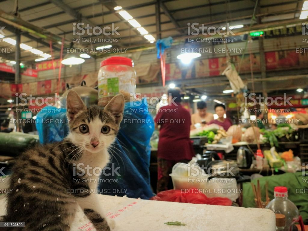 Kitten on Vegetable Stall in Farmer's  Market royalty-free stock photo