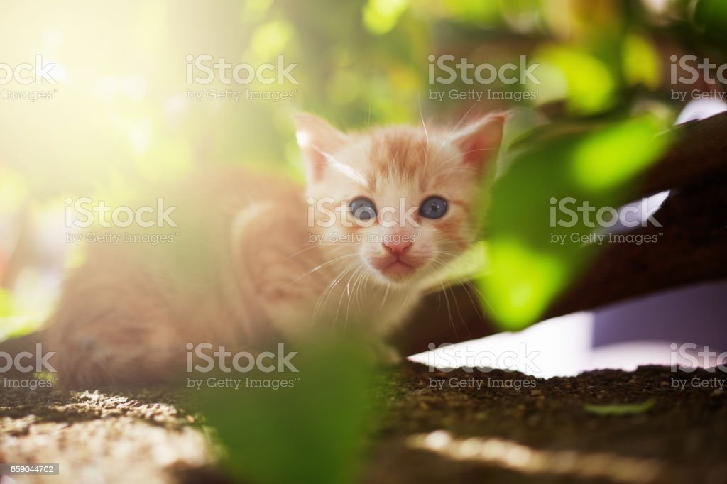 Kitten out in discovery royalty-free stock photo
