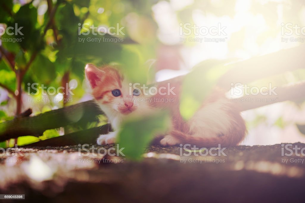 Kitten out in discovery