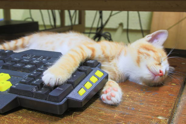 Kitten paw on keyboard computer cat orange concept business in the picture id930334424?b=1&k=6&m=930334424&s=612x612&w=0&h=o3t29axjuqljizv qp1r0rg3wgdzj4fe0afwrukzoig=