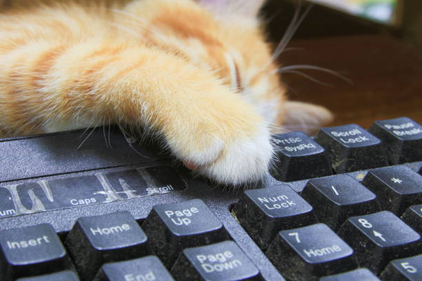 Kitten paw on keyboard computer cat orange concept business in the picture id930334444?b=1&k=6&m=930334444&s=612x612&w=0&h=ldtjux6hrr4alu7oxcmhrtnmmkdk1og ipo7wxftiiy=