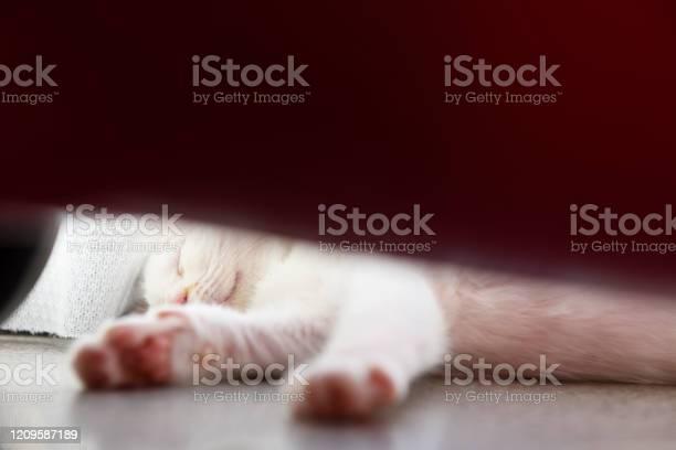 Kitten paws at windowsill picture id1209587189?b=1&k=6&m=1209587189&s=612x612&h=ppj0tp2qbutplp u bzifjlccwp2 uz4cwpki4lav54=