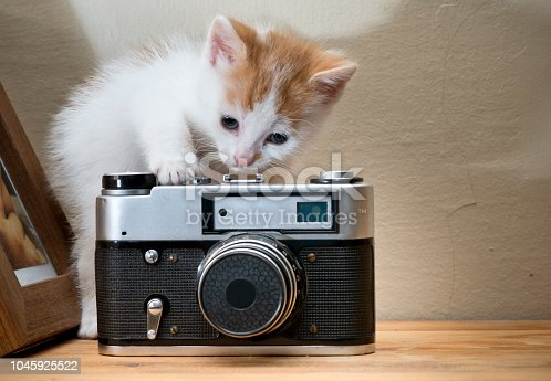 Kitten with old photo camera