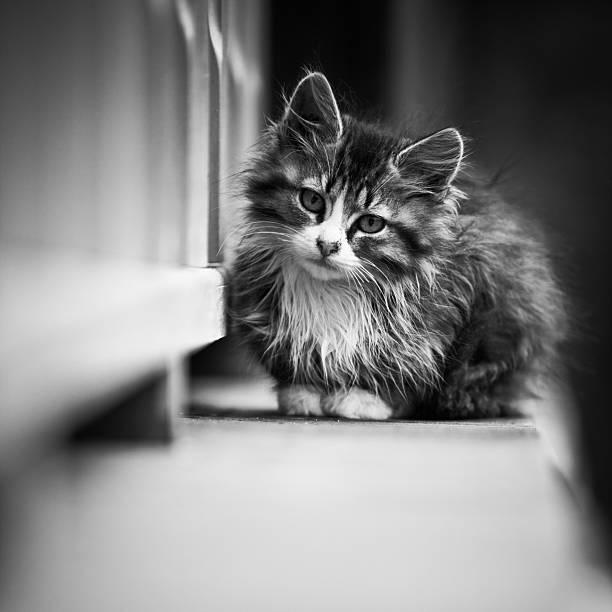 Katzenjunges – Foto