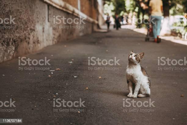 Kitten picture id1126707184?b=1&k=6&m=1126707184&s=612x612&h=lvrbs6u2fjnpzrc6i7fpixc5ljxjfh97ielr4bk7cru=