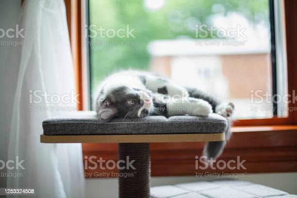 Kitten picture id1253324508?b=1&k=6&m=1253324508&s=612x612&h=rmbi17kgrhdtibk5znrg98nvp 6eoqox9zcslz5zbxi=