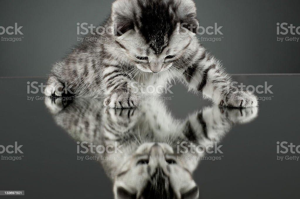 kitten royalty-free stock photo