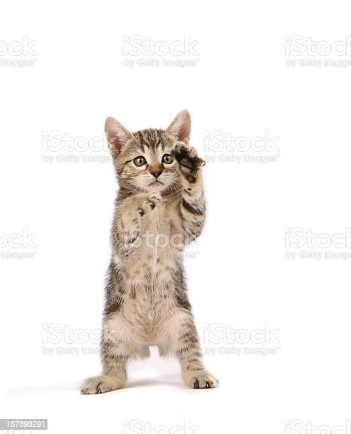 Kitten picture id157393291?b=1&k=6&m=157393291&s=612x612&h=vol5xg7duj9u0dod344fmveguzuimpb4yjtf1fltfwk=