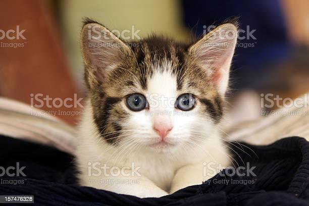 Kitten picture id157476328?b=1&k=6&m=157476328&s=612x612&h=s2u7usf fujlt0ozodntpponbwrnsosqoopqslpcvju=